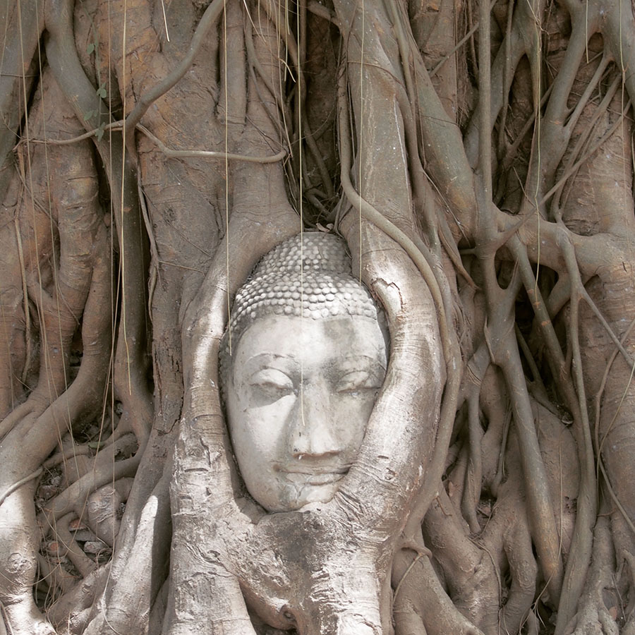 instagram thailande ayutthaya tree